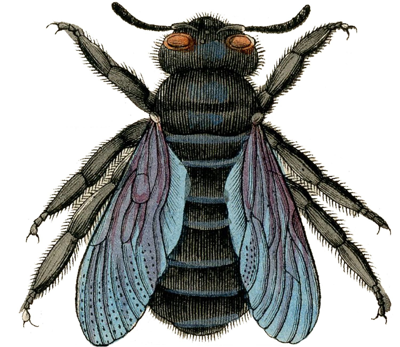 BeeCarpentar-GraphicsFairy.jpg (1500×1300)