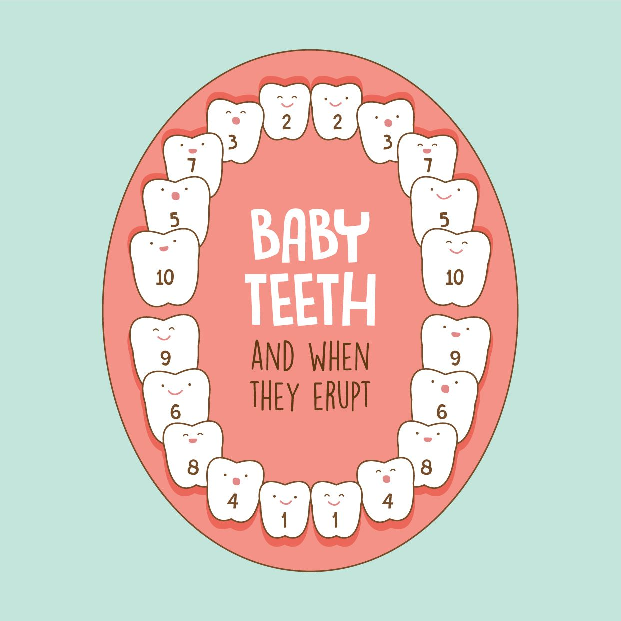 Did you know that baby teeth erupt in a particular order