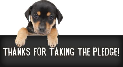 no more puppy mills