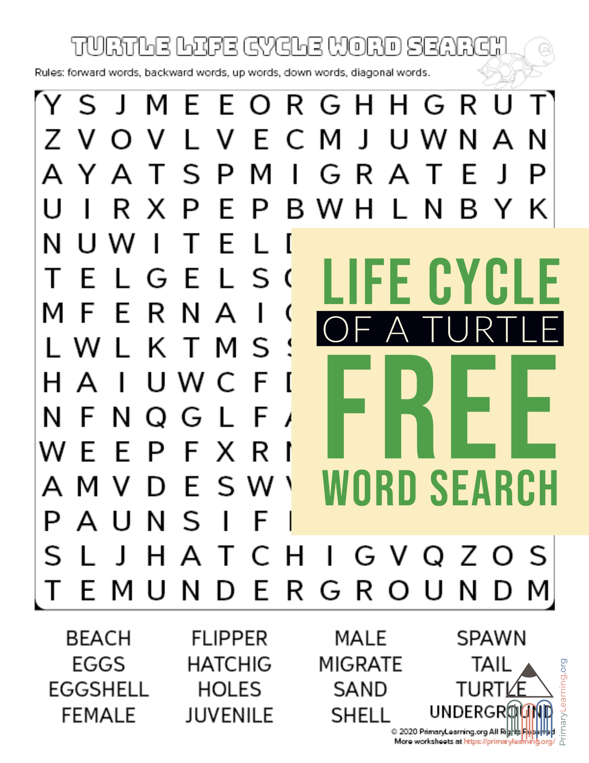 Turtle Life Cycle Word Search