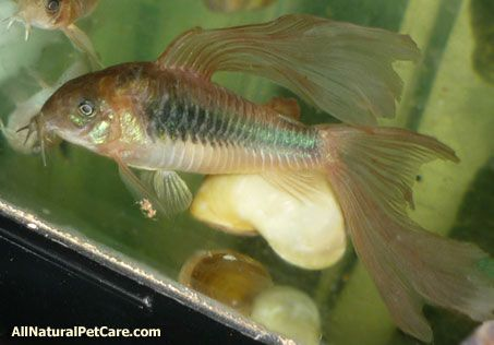 Natural Fish Food and Supplements for Fancy Fins | Fish ...