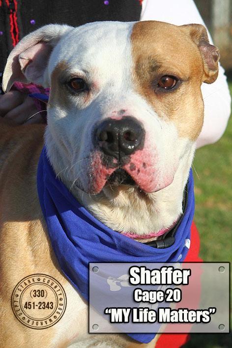 Adopt 20 Shaffer Adopted On Adoption Feel Good News Stark County