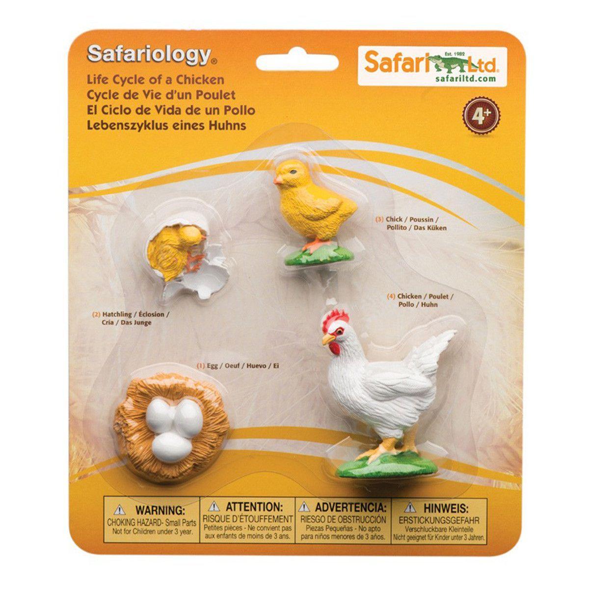 Life cycle of a chicken figures safari ltd cycling montessori life cycle of a chicken 4 piece safariology set robcynllc Choice Image