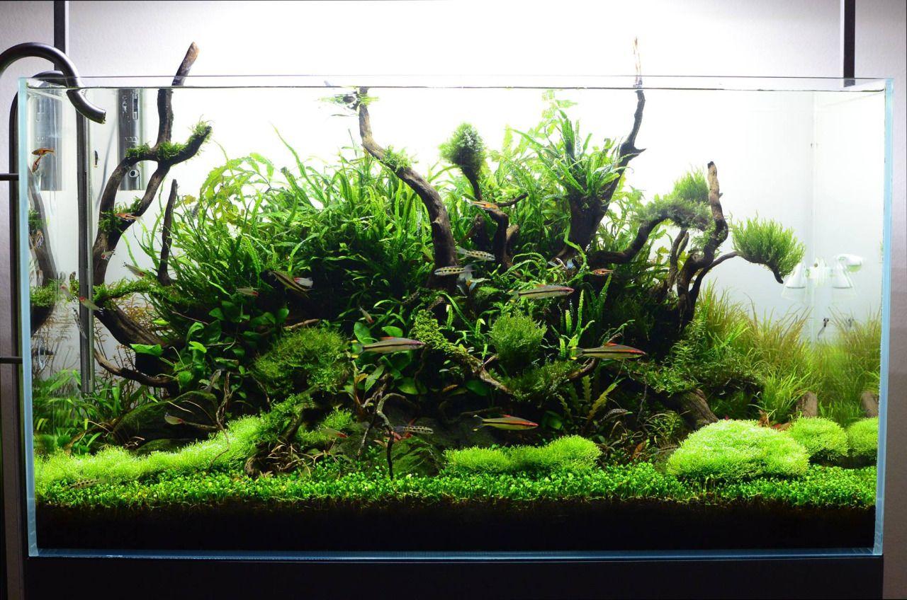 simonsaquascapeblog favourites tank by hiep hong a