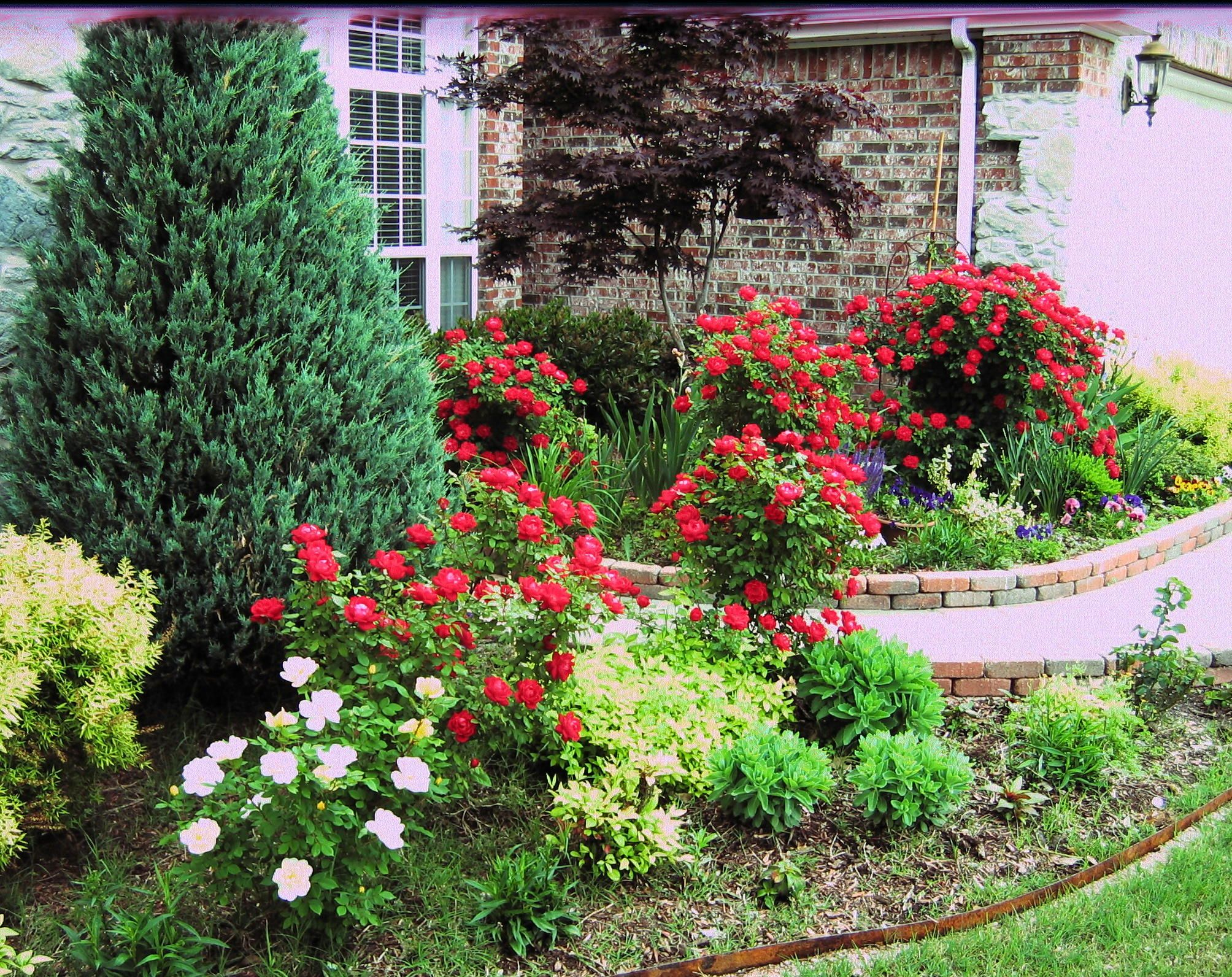 Landscaping with Knock Out Roses
