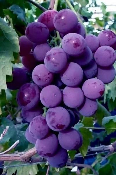 Пин от пользователя Tatyana Toulchinsky на доске Fruits ...  Фруктовый Сад Обои