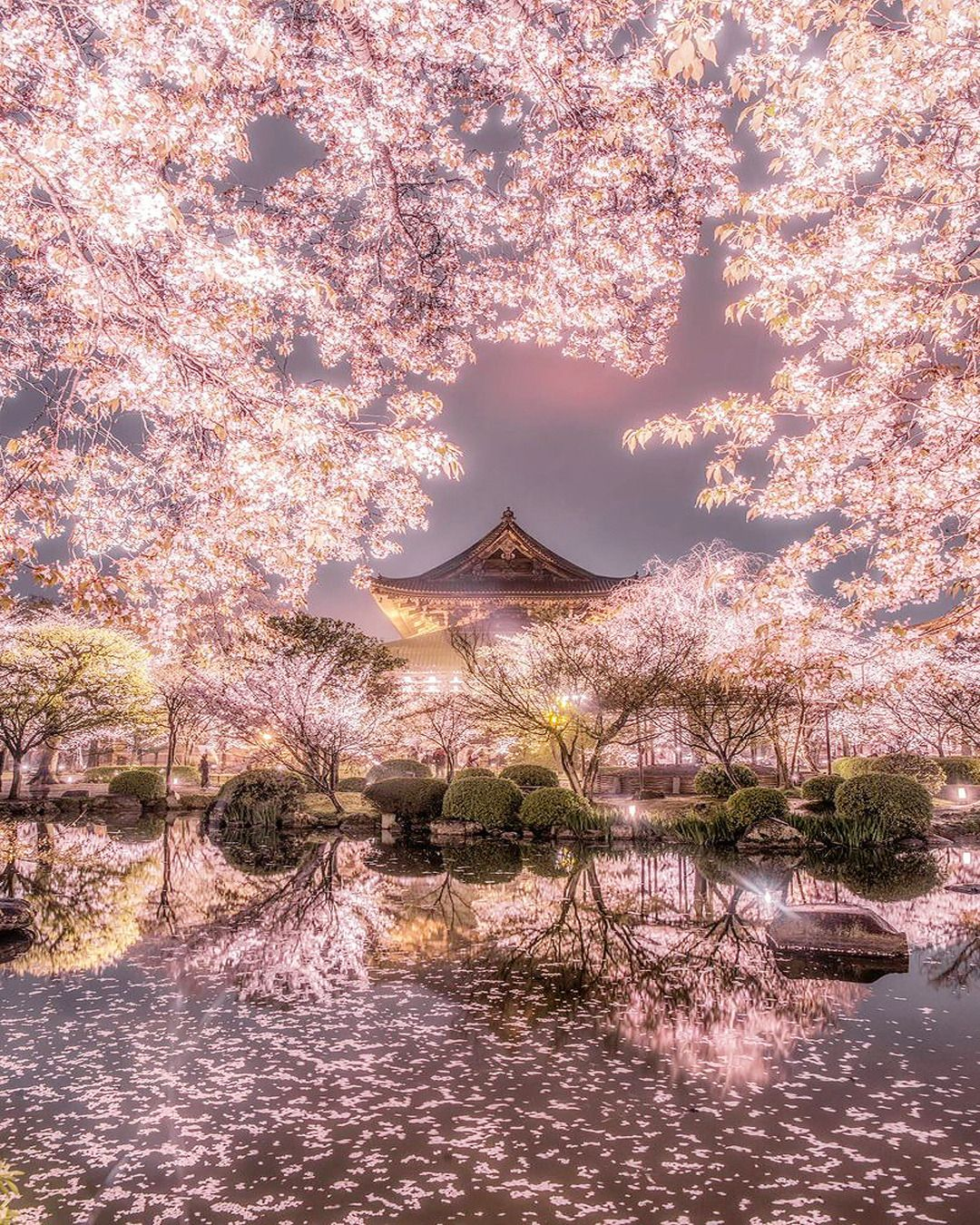 Pin By Poppy Mcnicholas On Cherry Blossoms Cherry Blossom Japan Beautiful Landscapes Scenery