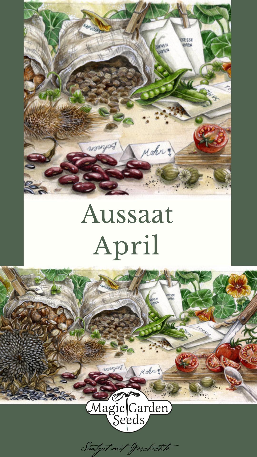 Aussaat Im April Aussaatkalender Von Magic Garden Seeds Der Samereien Versand Fur Alte Sorten Raritaten Und Seltene Seltene Pflanzen Baumsamen Gartensamen