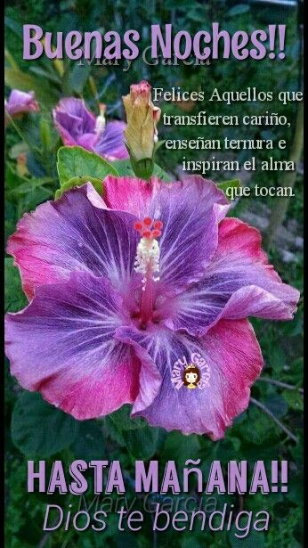 Pin By Mariarivera On Bible Quote Hibiscus Plant Plants Hibiscus
