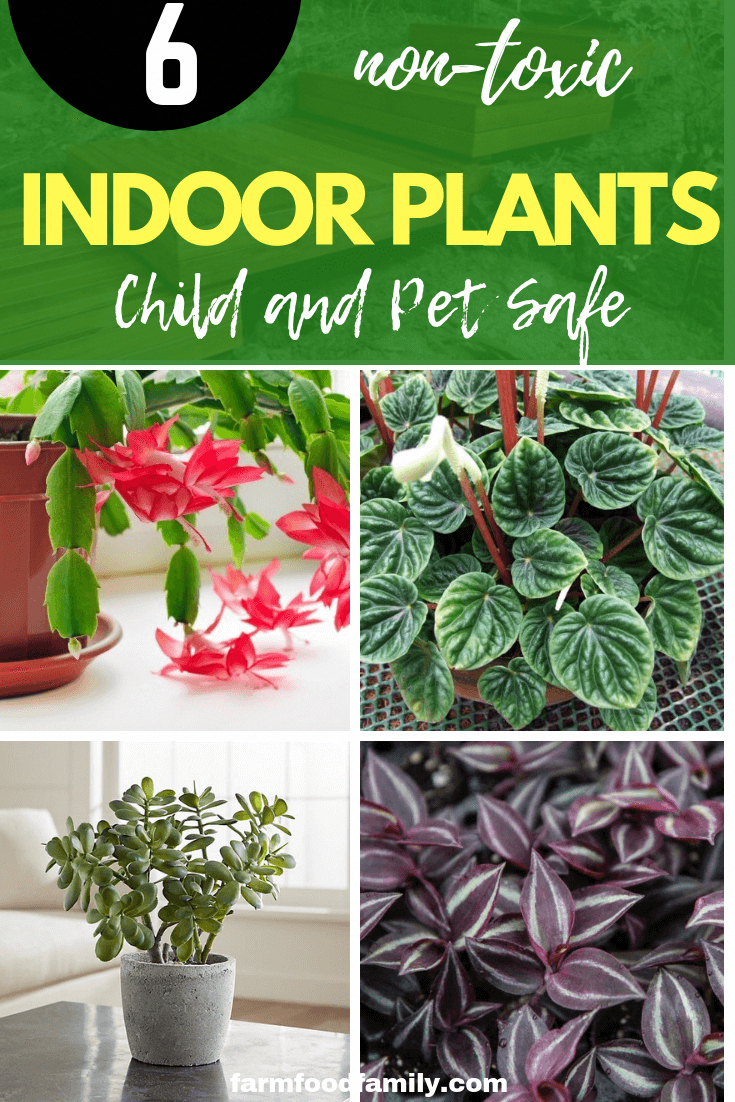 Child And Pet Safe Houseplants 6 Non Toxic Indoor Plants Safe House Plants House Plants Indoor Easy House Plants