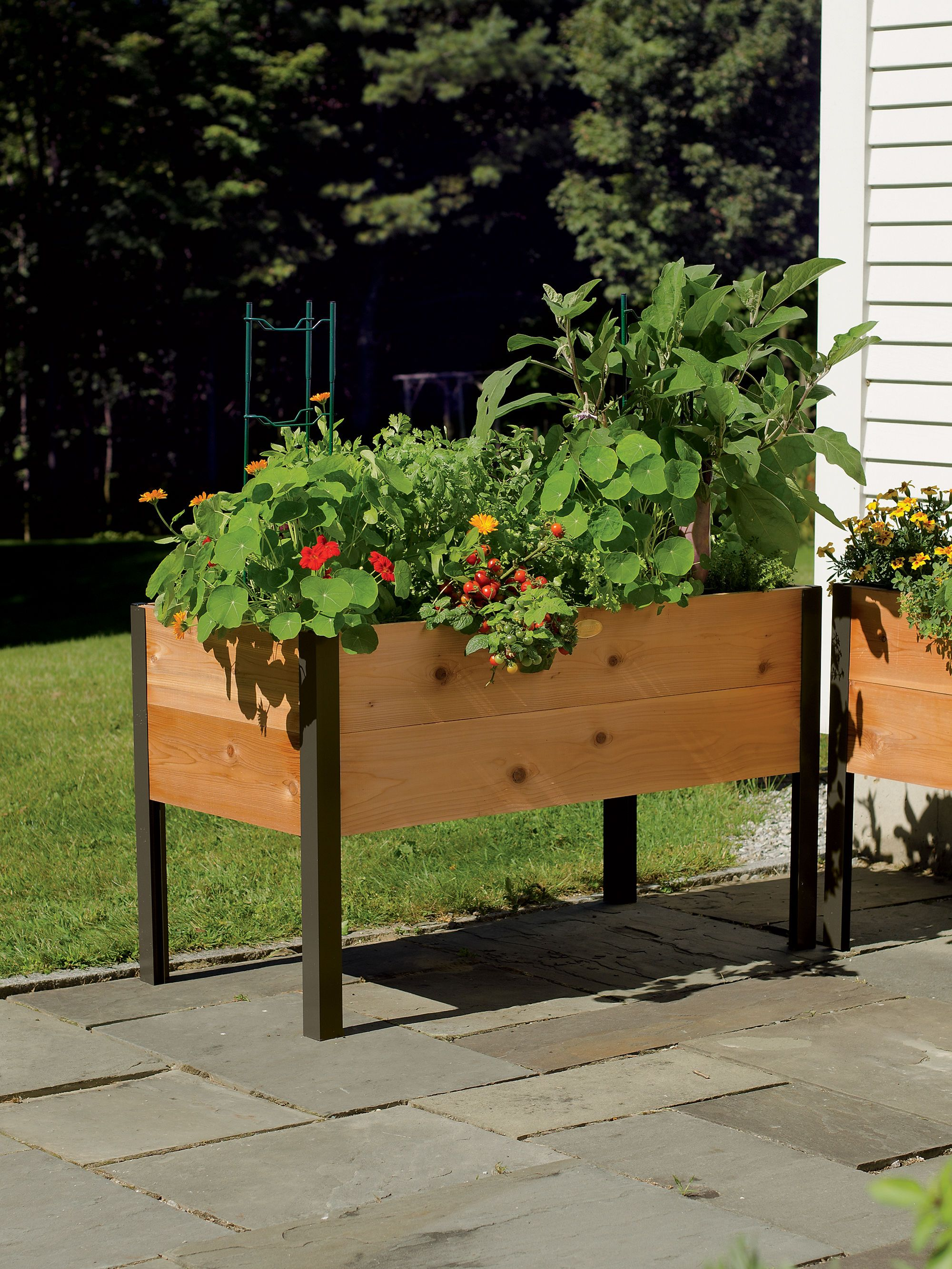 Above ground garden beds plants - Elevated Garden Beds Eliminate The Need To Bend Or Kneel And Make It Convenient To Plant Tend And Harvest Vegetables And Flowers Satisfaction Guaranteed