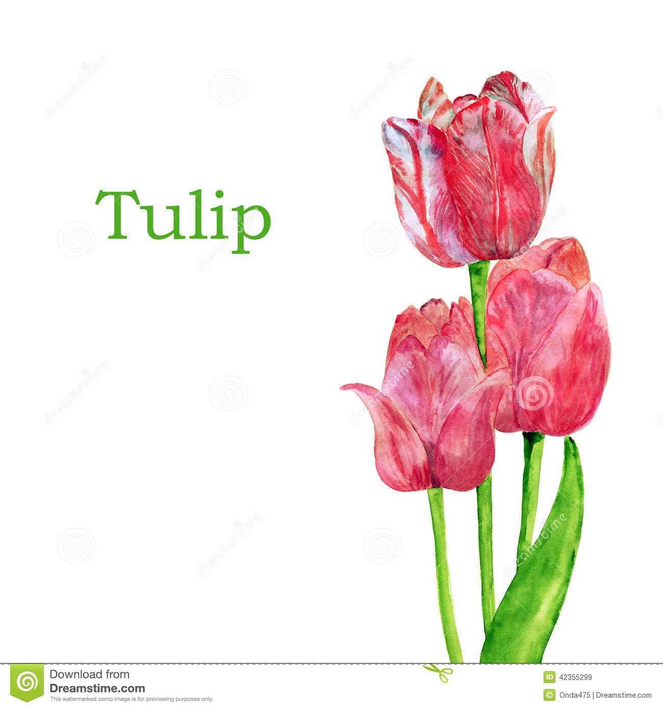 Tulips Isolated On A White Background. - Download From Over 36 Million High Quality Stock Photos, Images, Vectors. Sign up for FREE today. Image: 42355299