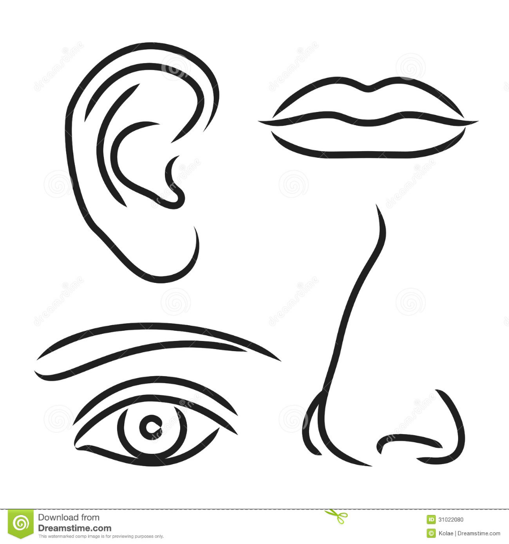 Vector Illustration Nose, Ear, Mouth And Eye Stock Vector