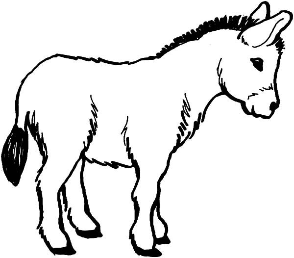 Donkey Face Coloring Page Coloring