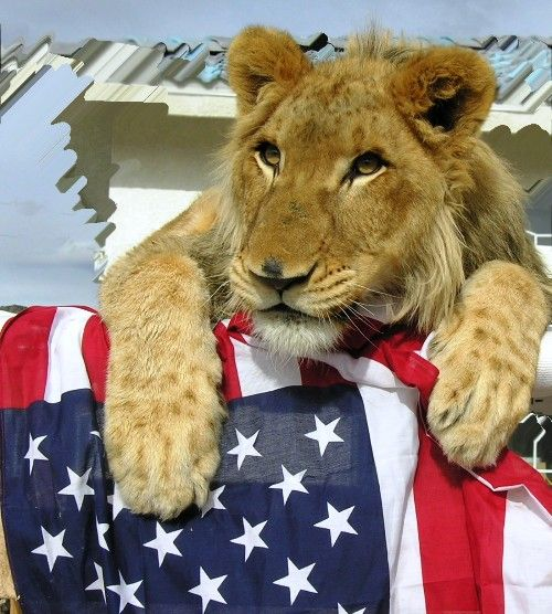 Pin On Lion Pictures