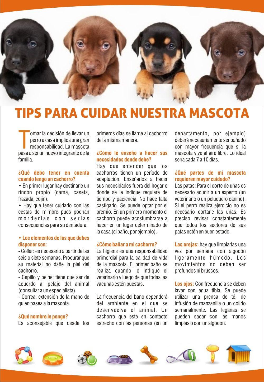 Tips para cuidar a nuestras mascotas