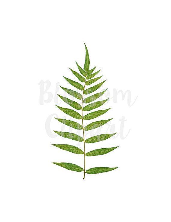 Leaf Vintage Leaves Clipart Graphic PNG For Digital