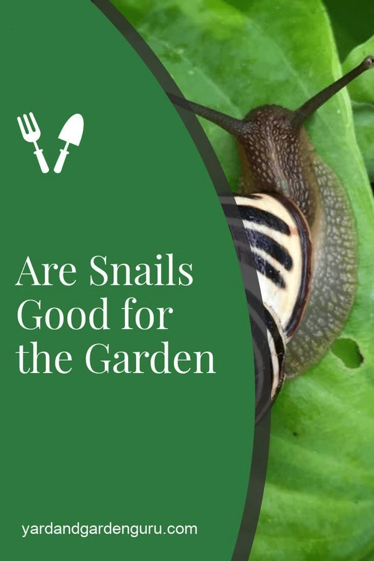 How To Find A Snail In Your Backyard - BACKYARD HOME