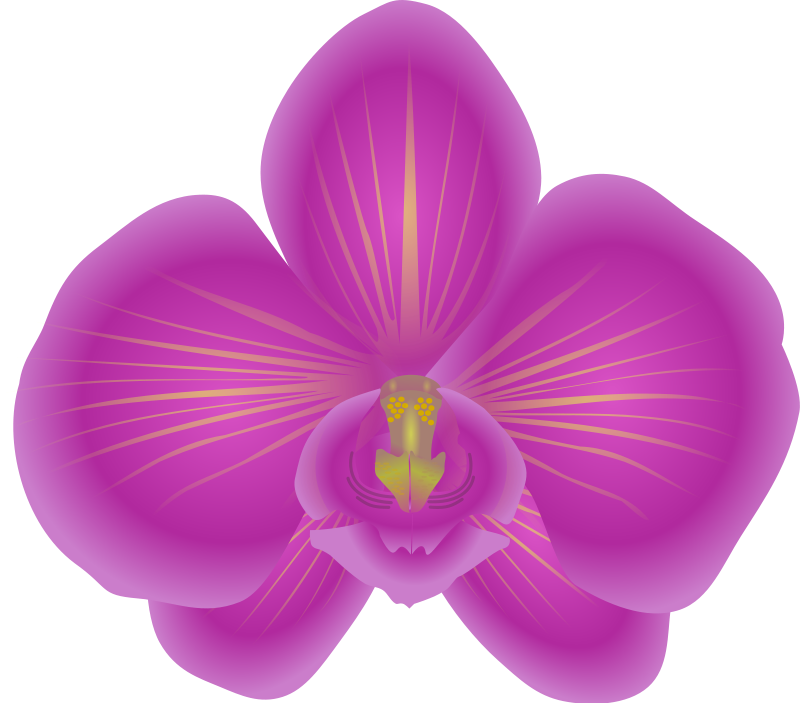Pretty Flower Clipart Clipart Suggest In 2020 Orchid Flower Clips Flower Clipart Orchid Flower