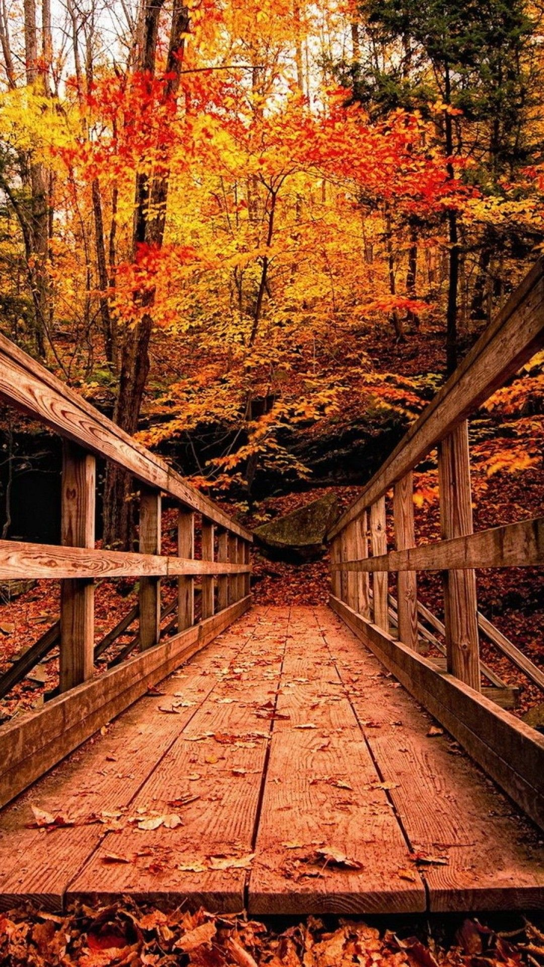Wood Bridge in Autumn Forest HD Wallpaper Android Phone