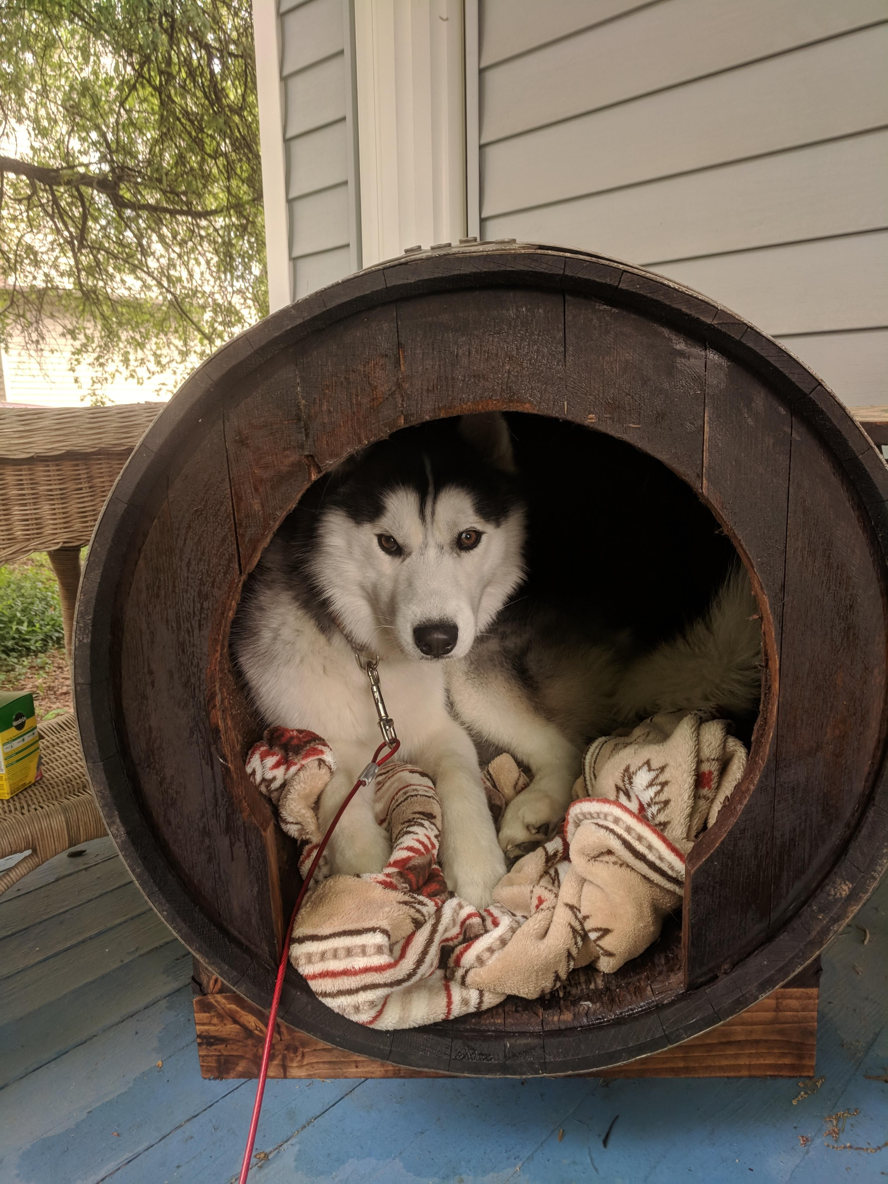 He Won T Come Out Of His New Dog House With Images Dog House