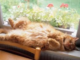 Relaxation illustrated.