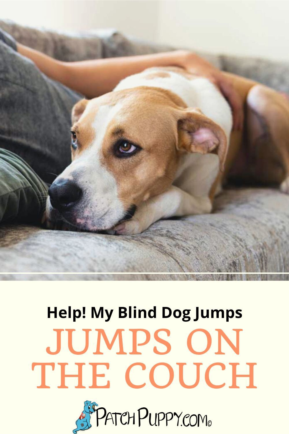 Blind Dog Jumps On Couch : blind, jumps, couch, Help!, Blind, Jumps, Couch, PatchPuppy.com, Dogs,, Training