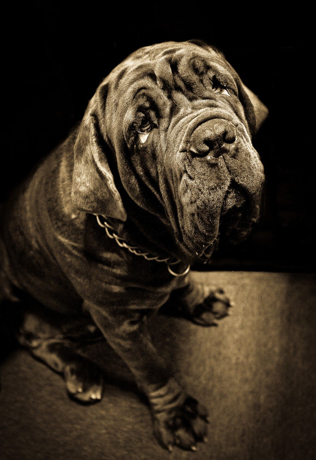 #Neopolitan #Mastiff Those eyes!!!!   Animal Goodness ...