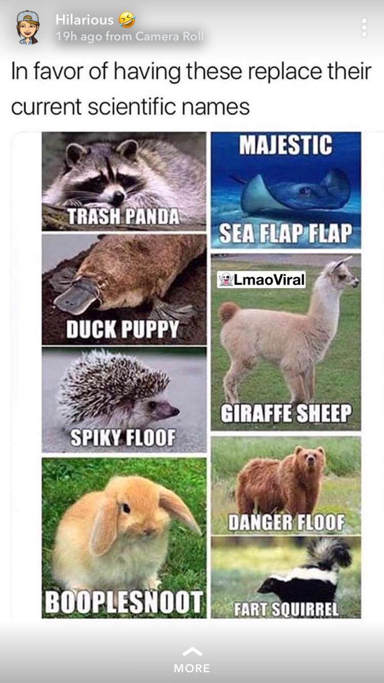 18++ Funny stuffed animal names ideas