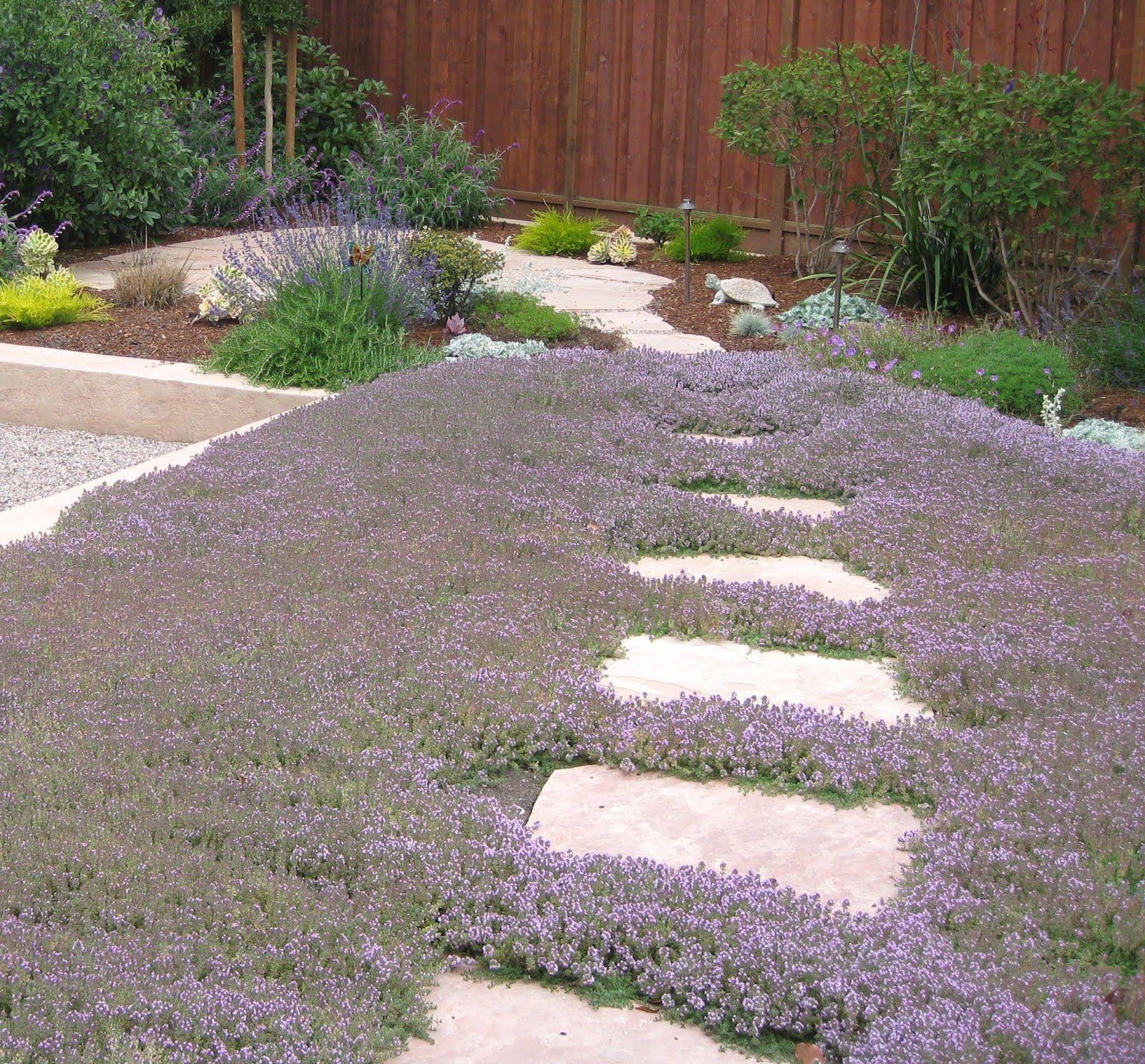astrid gaiser garden design lilac lawns – or why water wise rocks
