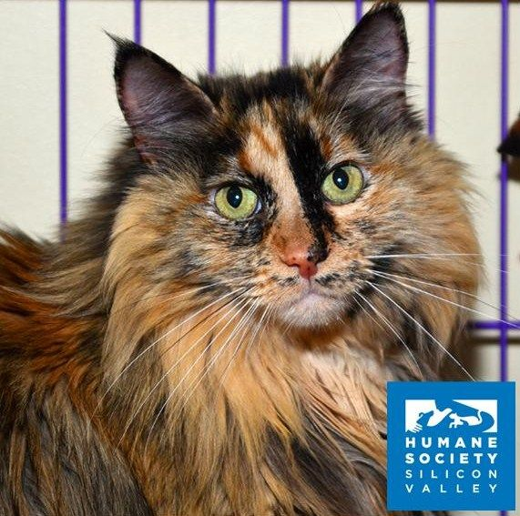 Christina and her sister are two gorgeous gals looking for a doting family to call their own.