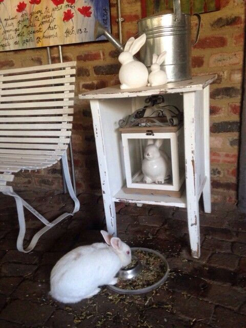 Resident Roger Rabbit playing his part in the decor...