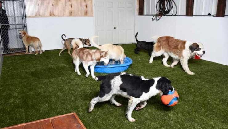 Dog boarding frisco tx dog boarding dogs pet beds