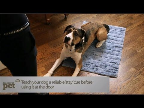 Teach Your Dog To Stay At The Door Teacher S Pet With