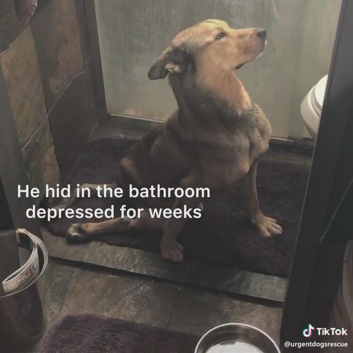 Photo of Gib niemals das Leben auf. Es ist wertvoll. Beobachten Sie die Verwandlung dieses depressiven Schutzhundes.