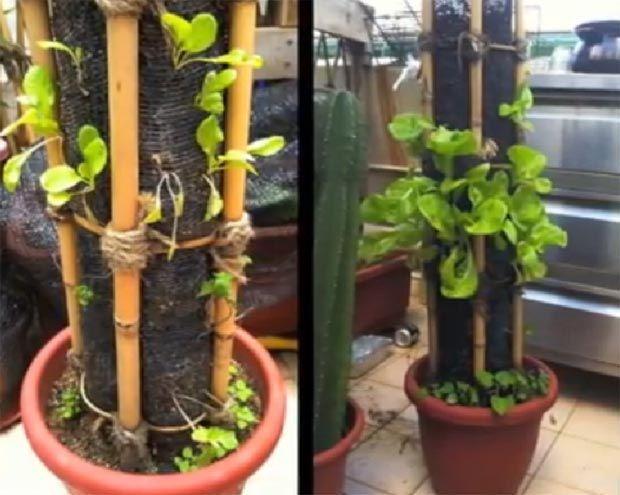encuentra este pin y muchos ms en jardines de mbartvi jardin vertical casero