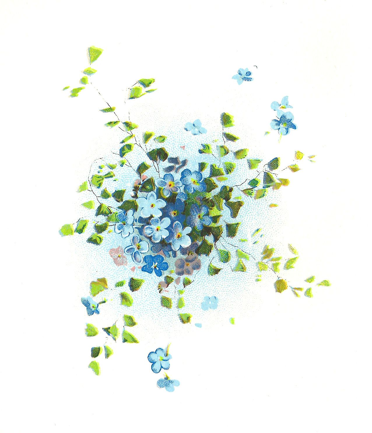 Antique Images: Free Flower Graphic: Forget-Me-Not Flowers Clip Art Cluster with Leaves