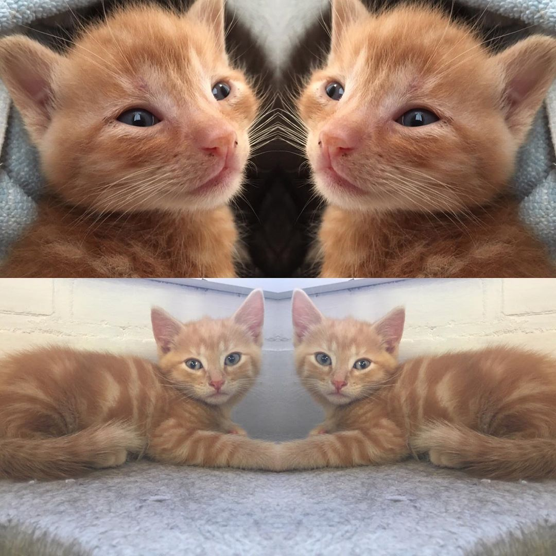 One Month Older Growing So Fast Catsofinstagram Catsagram Kittensofinstagram Cats Cat Notsimplecats Kitten Catlove Cat Day Cat S Cat Lovers