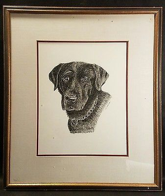 Excellent Framed Pencil Drawing of a Chocolate Lab? Signed by S. Whelden