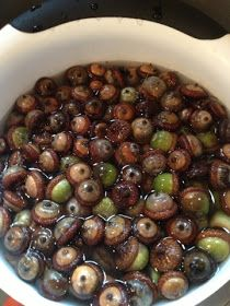 Photo of How to properly clean and dry acorns for decorating: Click on the image …