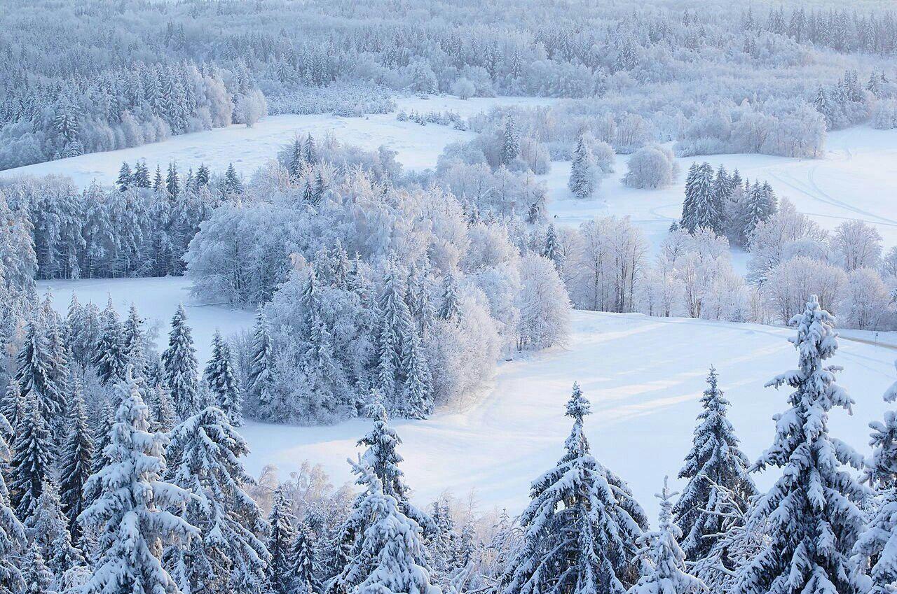 Paisagem de inverno em Haanja kõrgustik, vista da torre de observação do Suur Munamägi, Estônia.