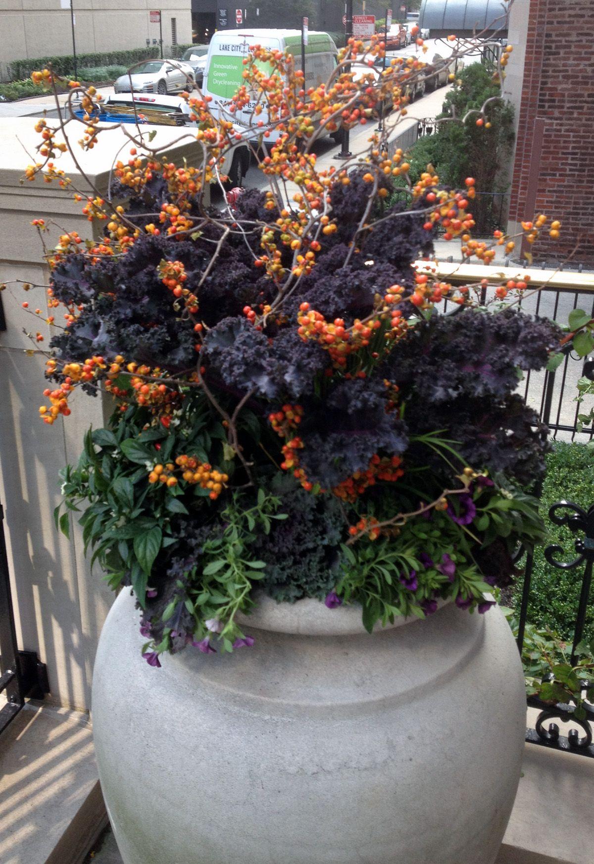 Fall planter container bittersweet kale calibrachoa urban garden Fallen Container GartenHerbst