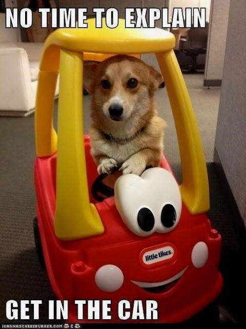 Funny Dog Memes Mycrazyemail Dogmemes Funny Dog Memes Funny Animal Pictures Animal Memes