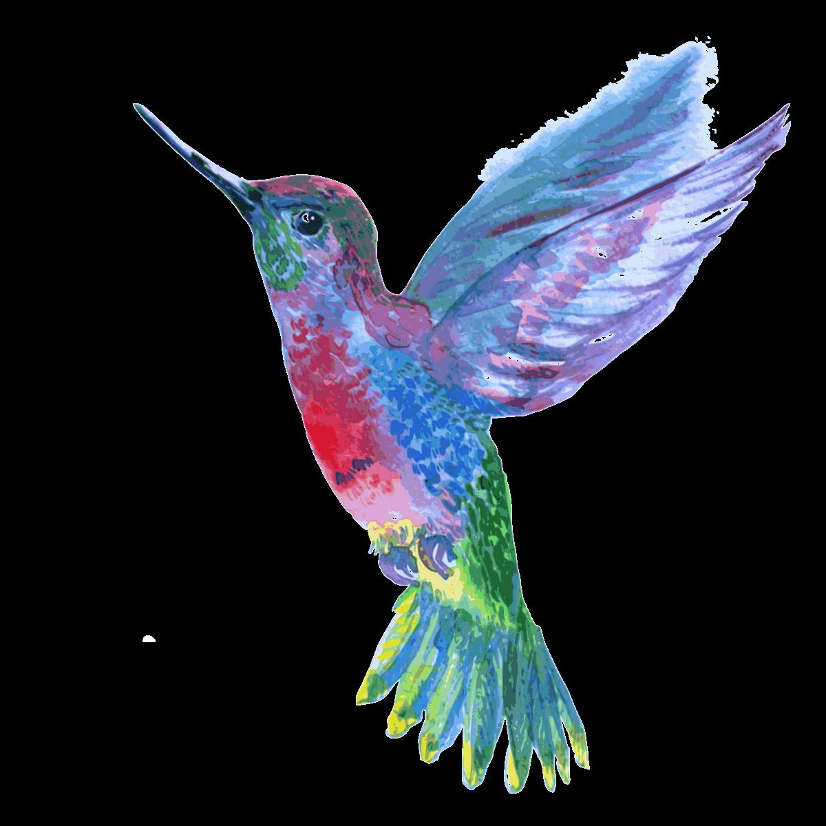 Hummingbird Png Hummingbird Painting Hummingbird Colors Hummingbird