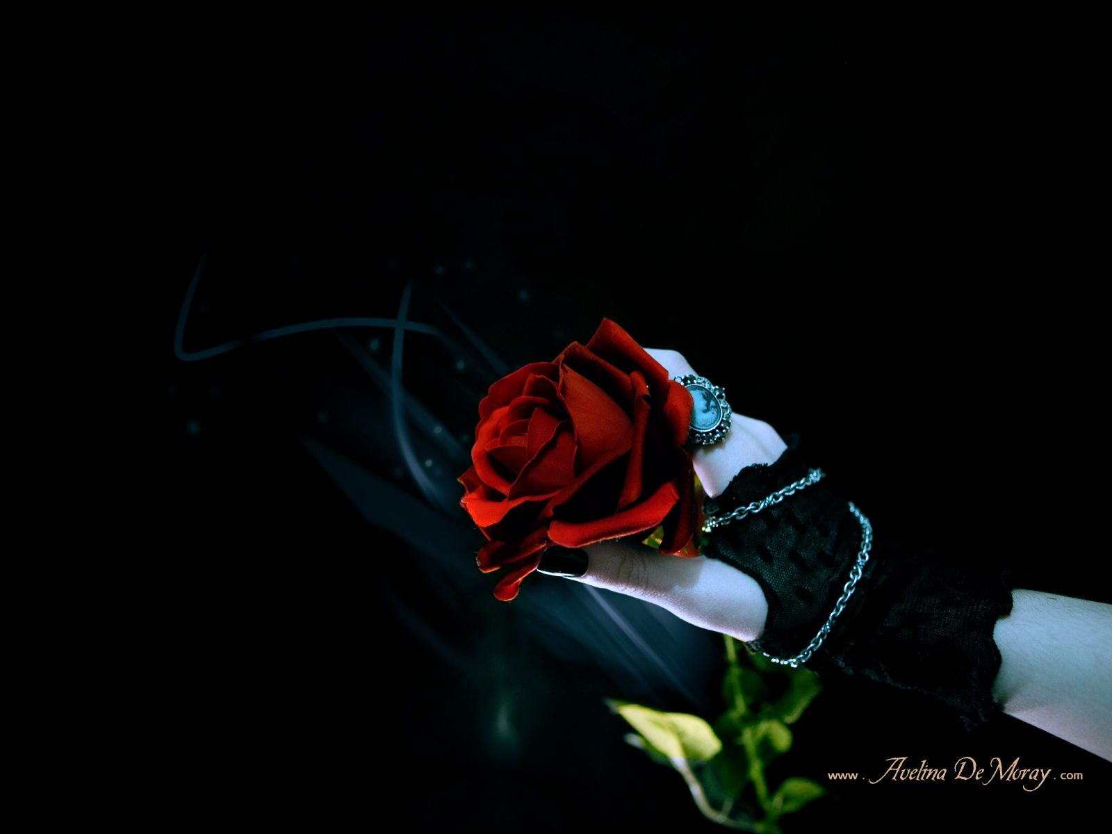Gothic Rose Chain Design Glove Hand Holding Leaf Red Wallpapers Resolution Filesize KB Added On October