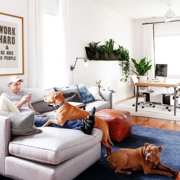 Work Hard Print In 2020 Pet Friendly Living Room Pet Friendly Furniture Living Room Plan