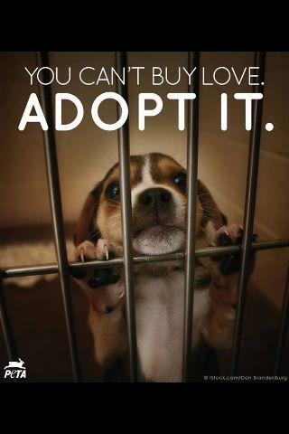 Don T Buy A Pet Adopt Pets Dogs Dog Adoption