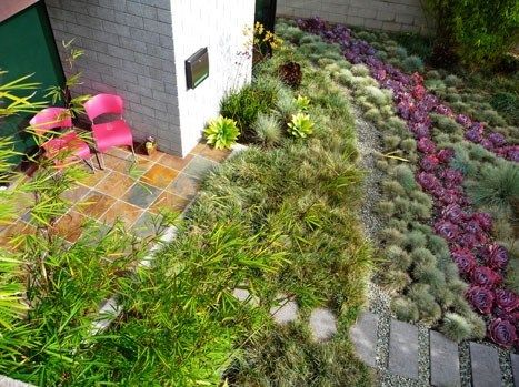Grasses Succulents Garden Design Kiesel Design Ventura CA