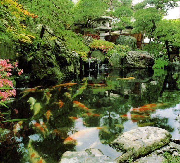 Koi Ponds And Gardens: Ponds Backyard, Japan