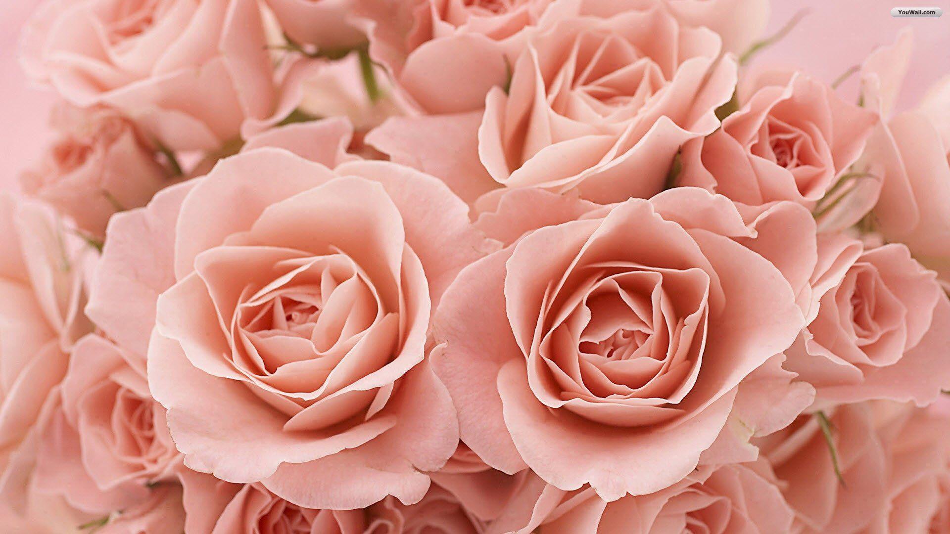 Pale Pink Paint